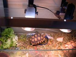 chauffage pour tortue